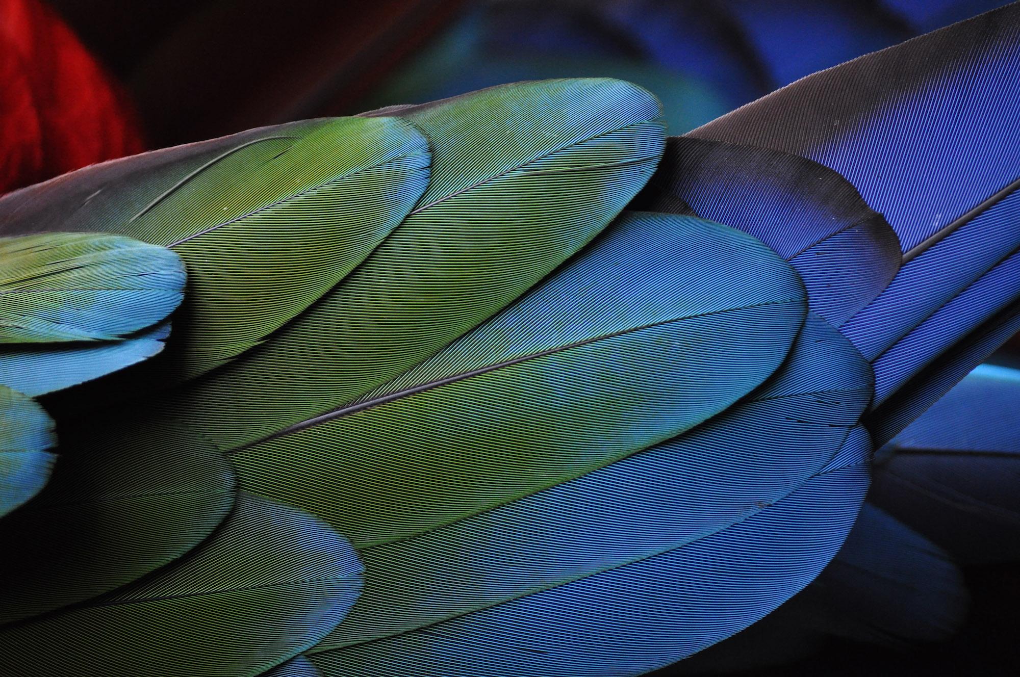 life-of-pix-free-stock-photos-parrot-feather-green-blue-photostockeditor